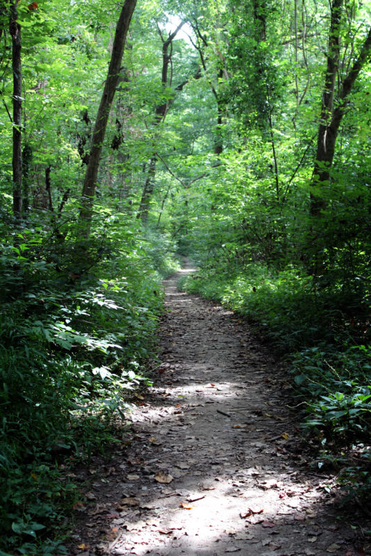 Overton forest